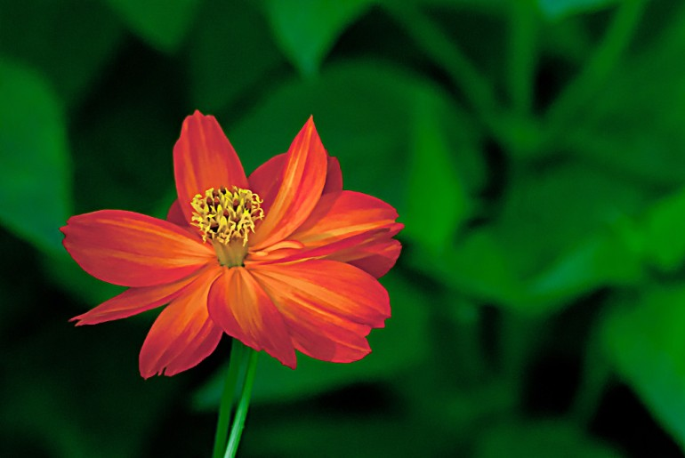 2 Quote A Flower Daily - Red Orange