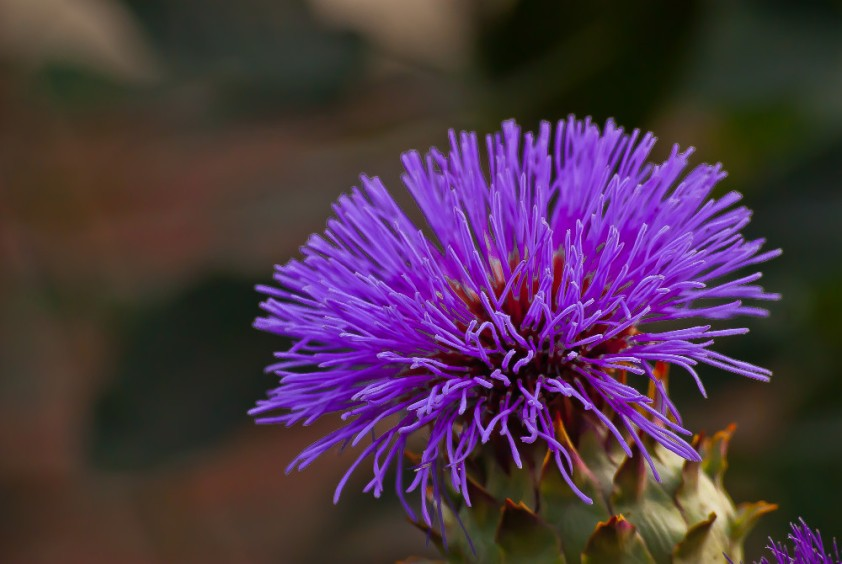 2 Quote A Flower Daily - Artichoke