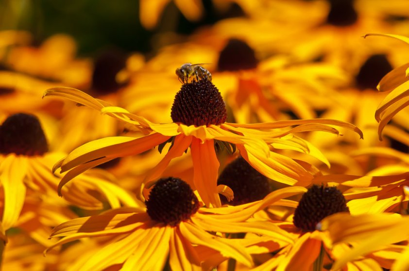 2 Quote A Flower Daily - Orange Bee