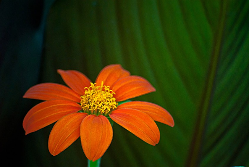 2 Quote A Flower Daily - Orange