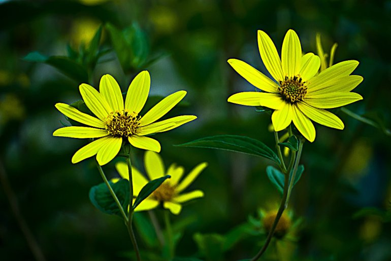 2 Quote A Flower Daily - Yellow