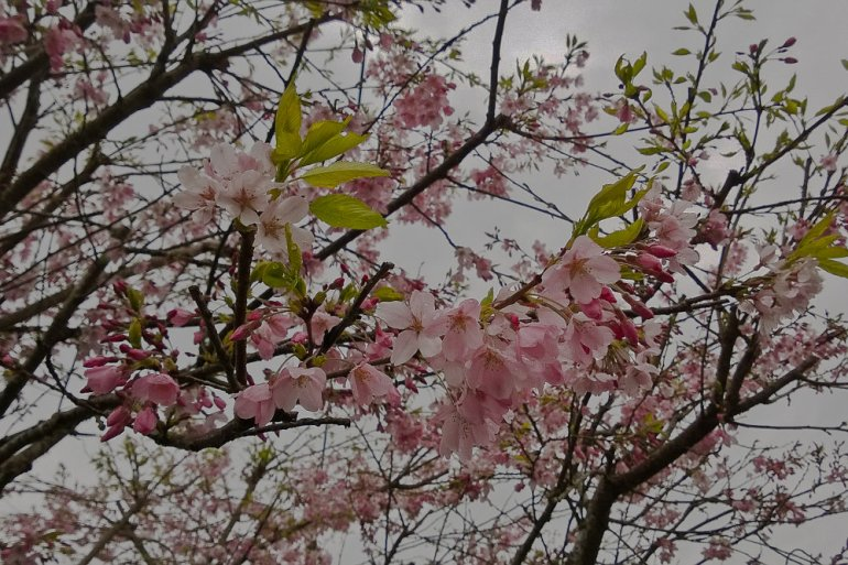 2 Quote A Flower Daily - Blossoming Tree