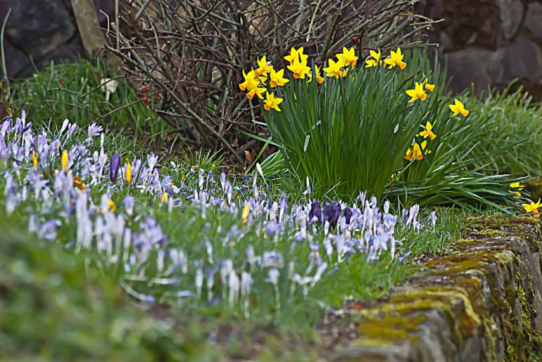 2 Quote A Flower Daily - Jonquil and Crocus