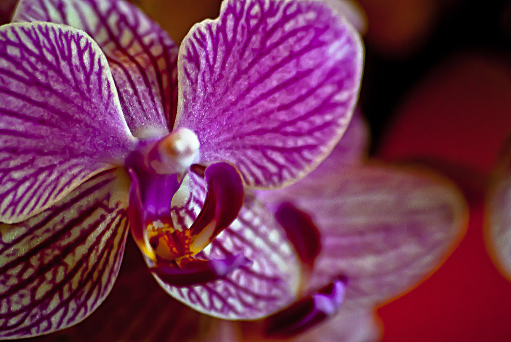 2 Quote A Flower Daily - Orchid
