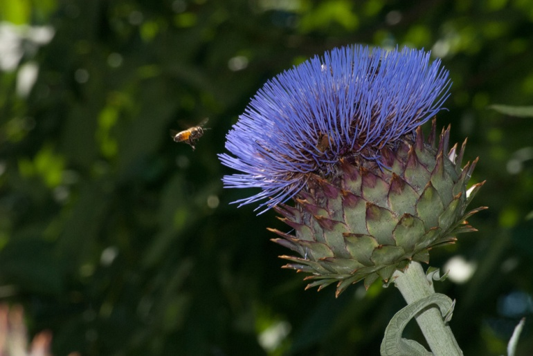 2 Quote A Flower - Bee Artichoke