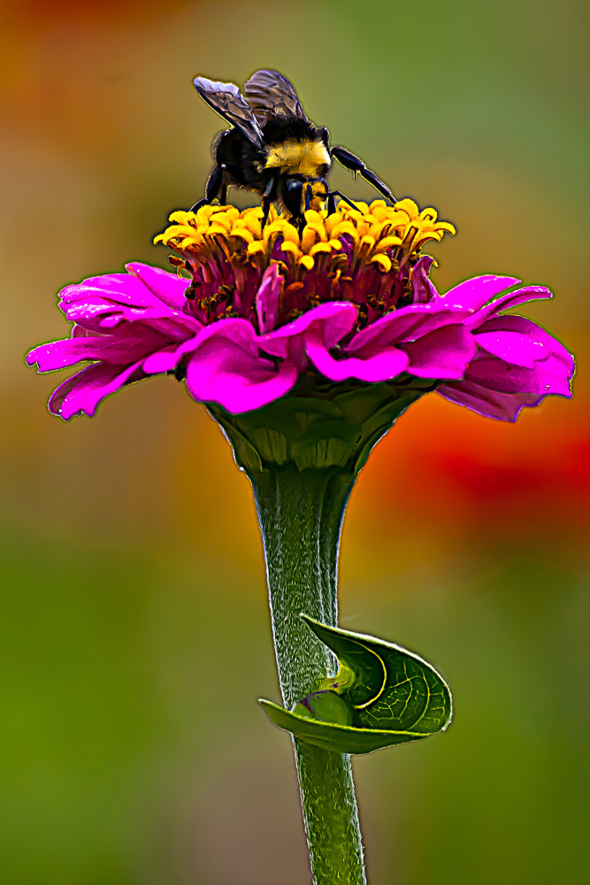 2 Quote A Flower Daily - Bee on Yellow Florets