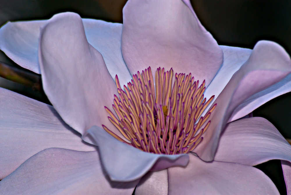 2 Quote A Flower Daily - Magnolia