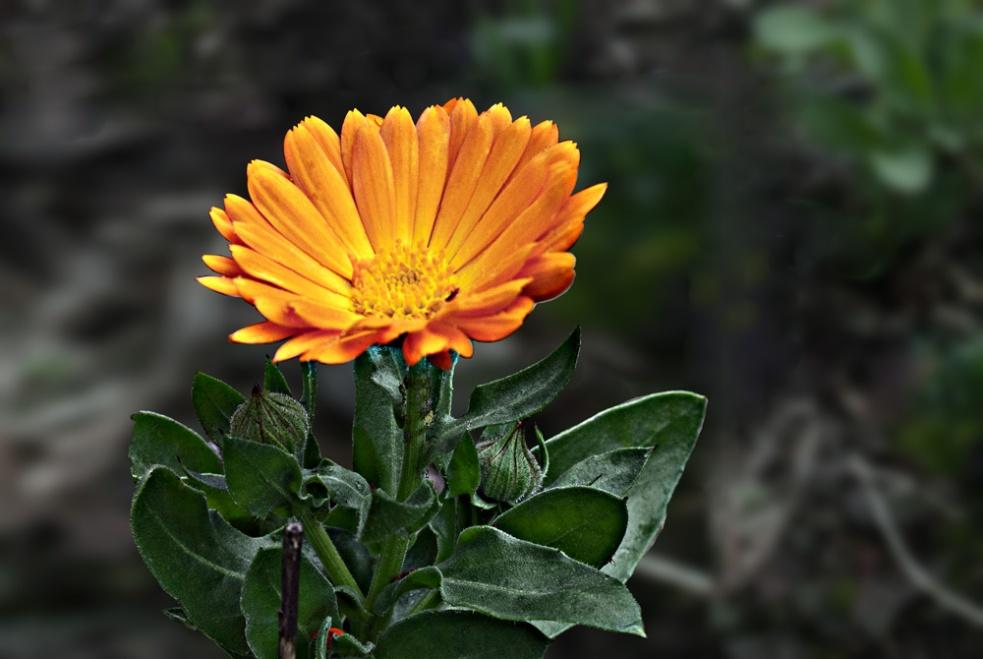 2 Quote A Flower - Orange Flower