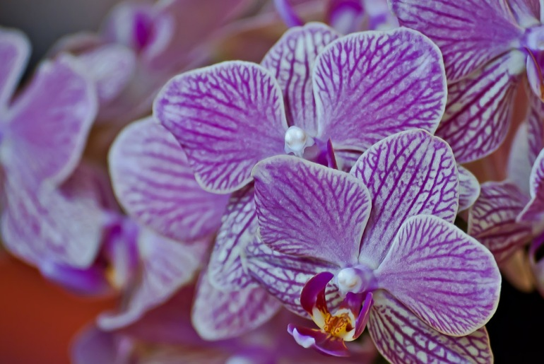 2 Quote A Flower Daily - Orchids
