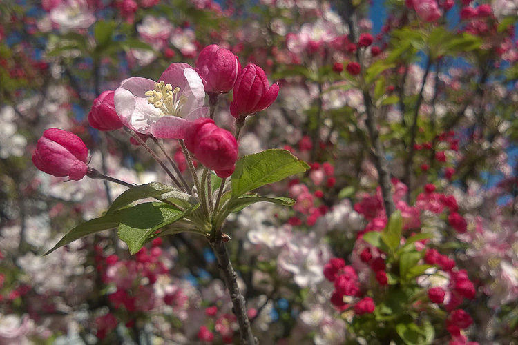 2 Quote A Flower Dialy - Blossoming Fruit 02