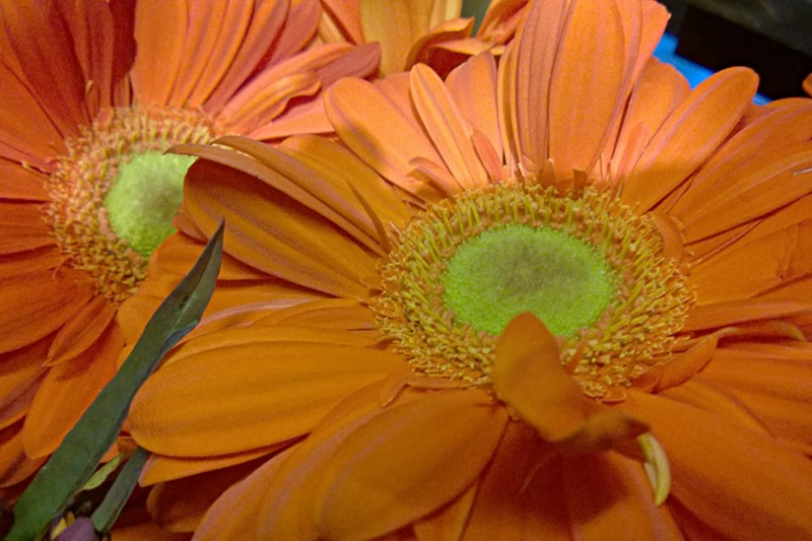 2 Quote A Flower Daily - Orange Gerberra 01