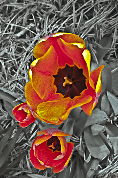 2 Quote A Flower Daily - Tulip Bowl