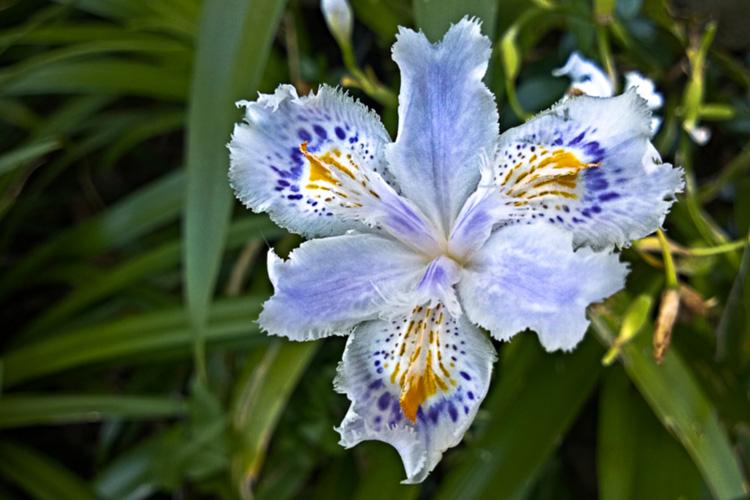 2 Quote A Flower Daily - White Scorpiris