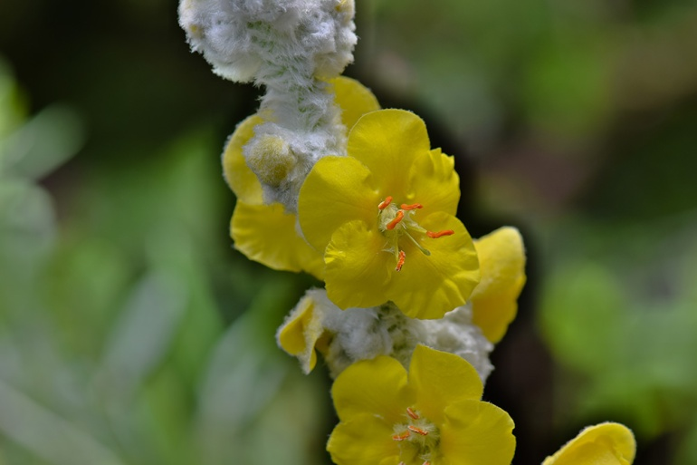 2 quote a flower daily yellow sage 2 quote a flower 2 quote a flower daily yellow sage mightylinksfo